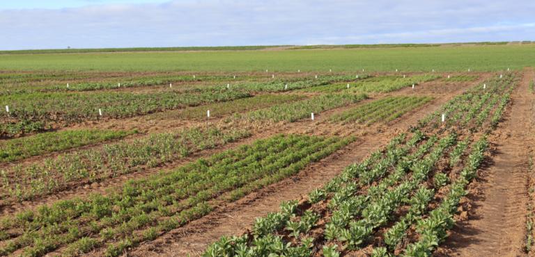 MSF - crops