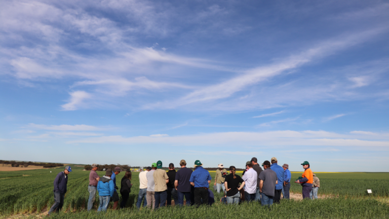 2020 Lameroo field day group cereal deep ripping